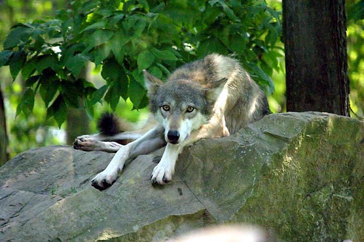 Волк с Уоллстрит 2013  смотреть онлайн  КиноПоиск